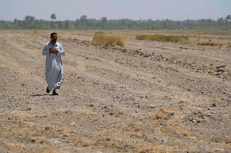 In this June 26, 2018 photo, a farmer walks through his fallow field where he normally grows rice, in the Iraqi town of Mishkhab south of Najaf. Iraq has banned its farmers from planting summer crops this year as the country grapples with a crippling water shortage that shows few signs of abating. Water levels across the Tigris and Euphrates Rivers have fallen by over 60 percent in two decades, according to a 2012 report by the U.N.'s Food and Agriculture Organization. (AP Photo/Anmar Khalil)