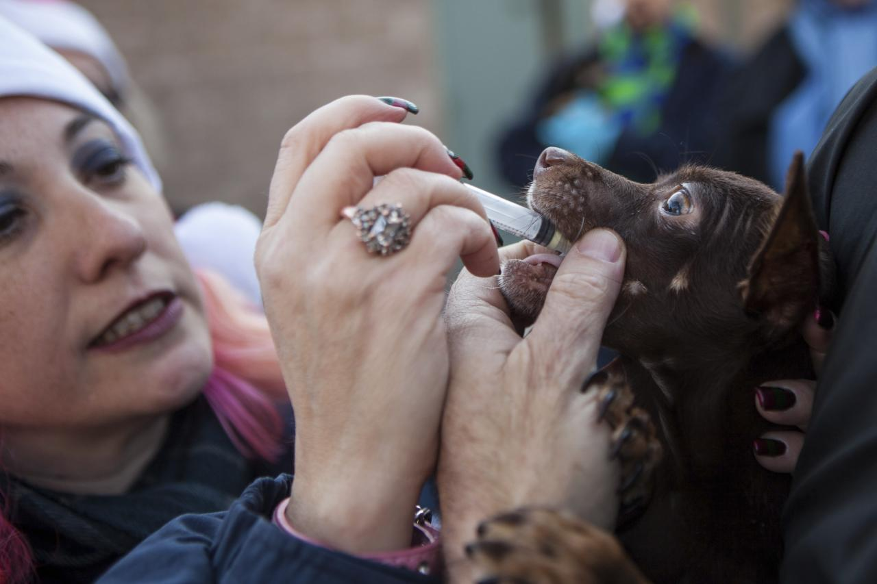 Front Street Animal Shelter's foster rescue coordinator Lori Rhoades gives deworming medication to a dog in Sacramento, California, in preparation for a flight of 50 dogs to a no-kill shelter in Idaho, December 9, 2013. Picture taken December 9, 2013. REUTERS/Max Whittaker (UNITED STATES - Tags: ANIMALS SOCIETY)