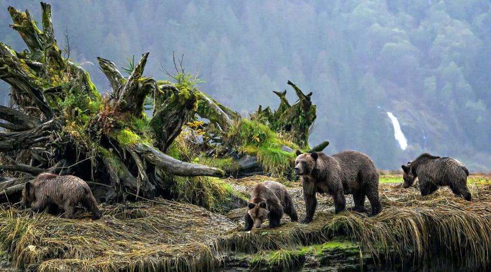 """<span class=""""caption"""">Research reveals a connection between Indigenous languages, bears and their terrain.</span> <span class=""""attribution""""><span class=""""source"""">(Michelle Valberg)</span>, <span class=""""license"""">Author provided</span></span>"""