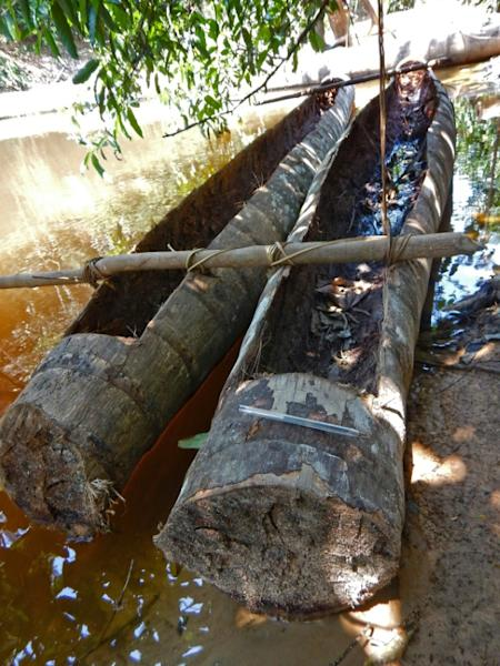 Brazil's FUNAI has made contact with eight isolated tribes in the Javari Valley -- but says that there are 11 more, detected via signs including a huge hut, handmade axes and canoes crafted out of palm tree trunks like those seen here