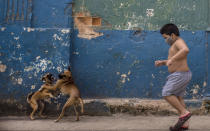 Wearing a face mask amid the new coronavirus pandemic, a child runs near a dog fight in Old Havana, Cuba, Tuesday, Oct. 27, 2020. Few countries in Latin America have seen as dramatic a change in U.S. relations during the Trump administration or have as much at stake in who wins the election. (AP Photo/Ramon Espinosa)