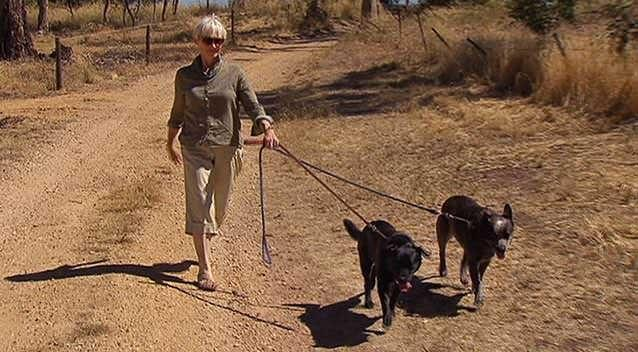 Ms Forster had been out walking her dogs when she was attacked by a koala. Photo: 7News.