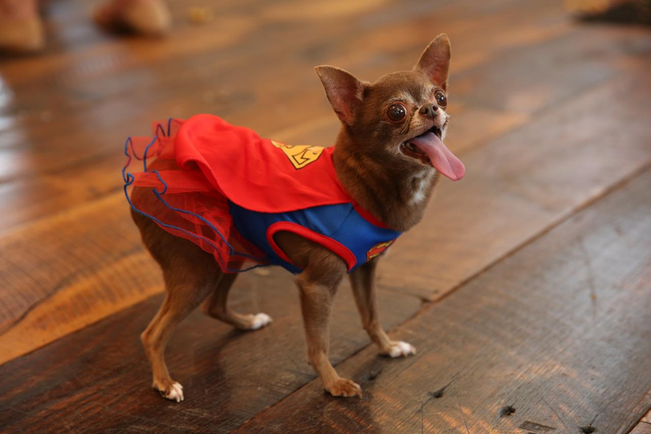 "<p>This Halloween, <a href=""https://www.instagram.com/chloekardoggian/?hl=en"">Chloe Kardoggian</a> is here to save the day! <i>(Photo: Petsmart)</i></p>"