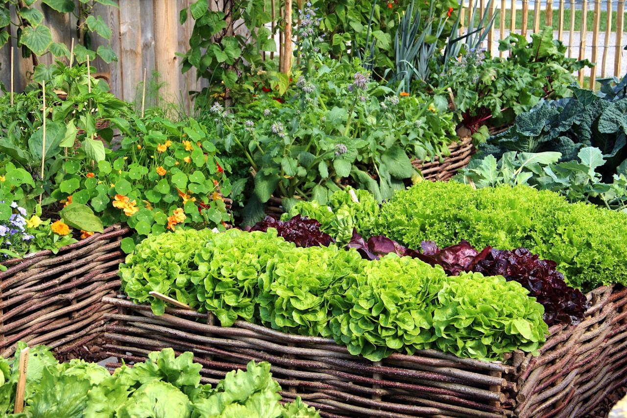 <p>It's part folklore, part science, but companion planting just may help your garden grow.<span></span></p>