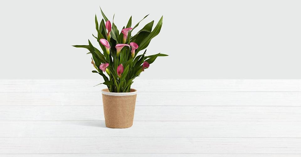 """<p>The woven container complements the <a href=""""https://www.popsugar.com/buy/Potted-Pink-Calla-Lily-444533?p_name=Potted%20Pink%20Calla%20Lily&retailer=proflowers.com&pid=444533&price=45&evar1=casa%3Aus&evar9=46127505&evar98=https%3A%2F%2Fwww.popsugar.com%2Fhome%2Fphoto-gallery%2F46127505%2Fimage%2F46129885%2FPotted-Pink-Calla-Lily&list1=shopping%2Cgift%20guide%2Cflowers%2Chouse%20plants%2Cplants%2Cmothers%20day%2Cgifts%20for%20women&prop13=api&pdata=1"""" class=""""link rapid-noclick-resp"""" rel=""""nofollow noopener"""" target=""""_blank"""" data-ylk=""""slk:Potted Pink Calla Lily"""">Potted Pink Calla Lily</a> ($45) wonderfully.</p>"""