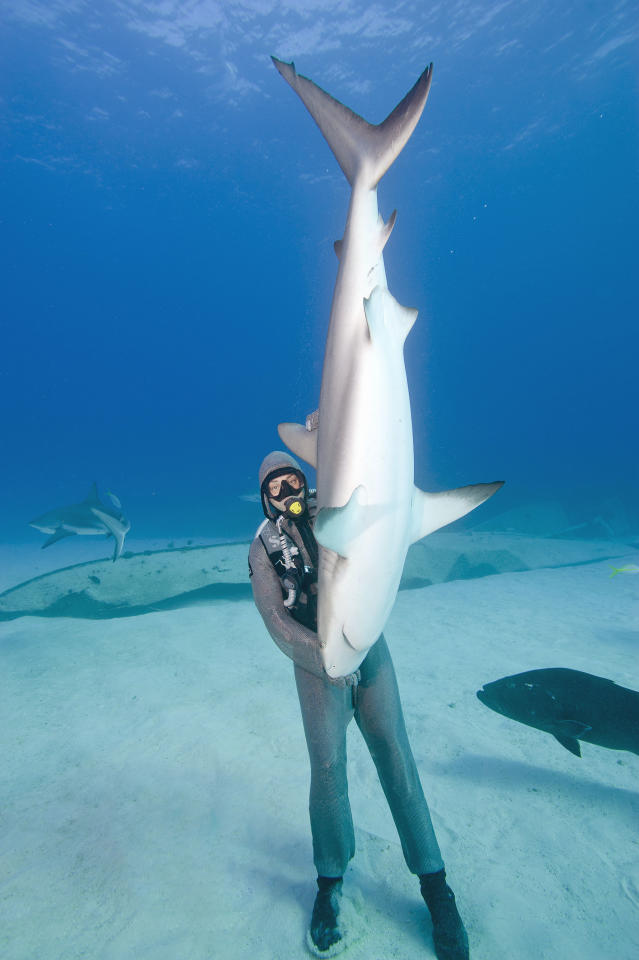 """A diver in the Caribbean balanced a vertical 10-foot shark thanks to her unusual ability to put it into a trance. To create the state, the Italian diver rubs the ampullae of Lorenzini, the name give to hundreds of jelly-filled pores around the animal's nose and mouth. She has used the technique to remove parasites and fishing hooks caught in shark mouths. It has been a big week in shark moments, after <a target=""""_blank"""" href=""""http://news.yahoo.com/cyclops-shark-other-cryptic-creatures-october-creepy-113008213.html"""">this photo</a> of a Cyclops shark also made the rounds. (Photo: Caters News)"""