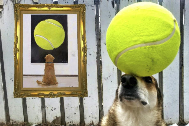 <p>Toby balances a large tennis ball on his head. (Photo: Pat Langer/Caters News) </p>