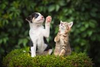 """Perfect size, perfect pair, perfect friendship! These tiny, and utterly adorable animals are proving that <a href=""""https://bestlifeonline.com/photos-cats-dogs/?utm_source=yahoo-news&utm_medium=feed&utm_campaign=yahoo-feed"""" rel=""""nofollow noopener"""" target=""""_blank"""" data-ylk=""""slk:cats and dogs can get along"""" class=""""link rapid-noclick-resp"""">cats and dogs can get along</a>."""