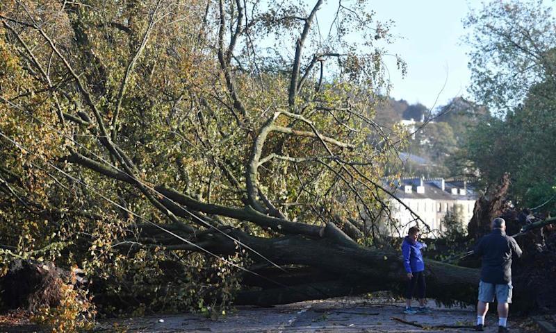 Large trees toppled in Cork, Ireland, this week after Hurricane Ophelia - recorded as the most northerly hurricane since 1939 – blew through as a violent storm.