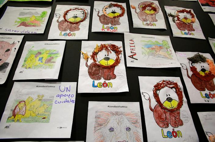 <p>Drawings of lions made by children are seen at the El Dorado Airport in Bogota, Colombia, April 29, 2016. <i>(John Vizcaino/Reuters)</i></p>