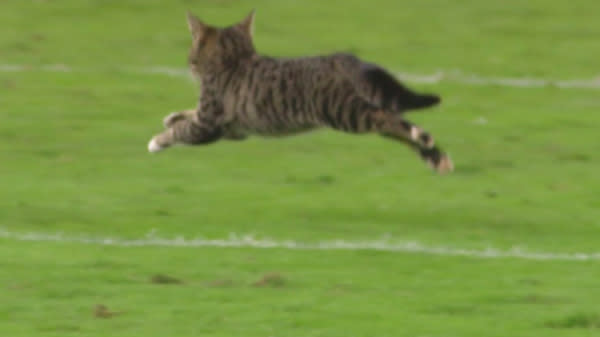 A Kitten's Scramble Was The Best Play On Thursday Night Football