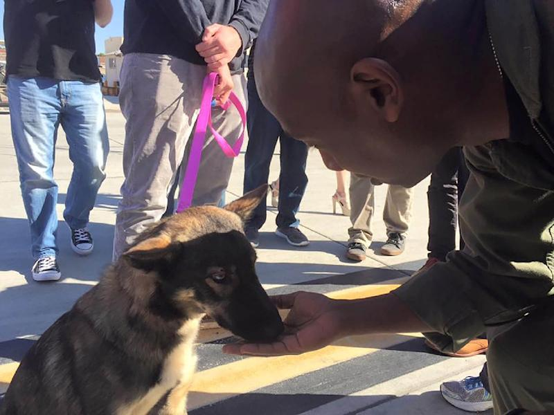 This US Navy photo obtained March 17, 2016 shows Luna, an 18-month-old German shepherd mix, reunited with Conner Lamb, a friend of her owner, at Naval Air Station North Island, San Diego, California, after going missing for five weeks