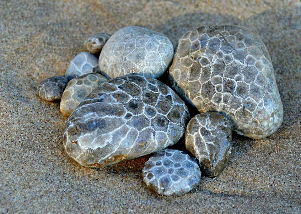 "<p><strong>State Stone: Petoskey Stone </strong></p><p>These patterned stones are the fossilized remains of coral. So cool the state designated this the <a href=""https://www.michigan.gov/documents/kids/statesymbolstext_645891_7.html"" rel=""nofollow noopener"" target=""_blank"" data-ylk=""slk:official stone back in 1965"" class=""link rapid-noclick-resp"">official stone back in 1965</a>. </p>"