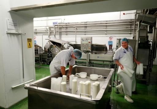 About 300 dairy farmers (cheesemaking at a dairy in Hampshire pictured February 2019), together producing around one million litres of milk daily, could be eligible for federal reimbursement