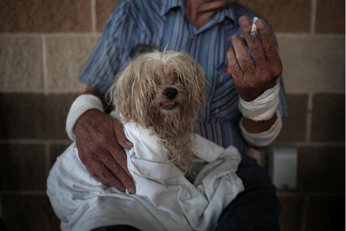 Bentley, a 10-year-old Maltese, takes refuge with his owner in a school after they lost their home to Hurricane Harvey in Rockport, Texas, Aug. 26, 2017. (Adrees Latif/Reuters)