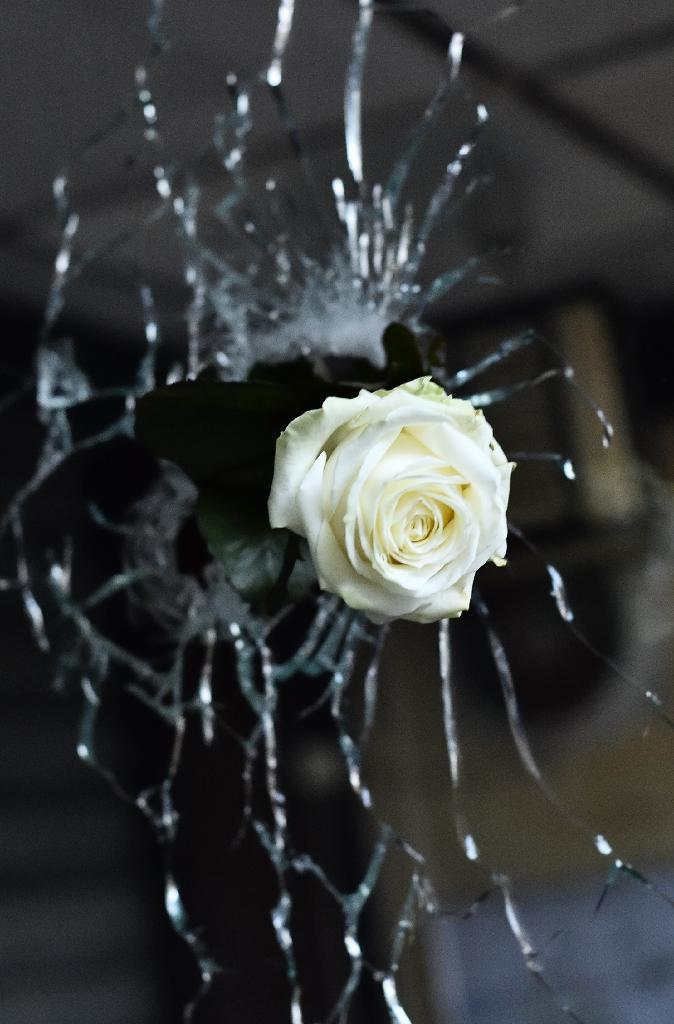 A rose is pictured in a bullet hole in the window of a Japanese restaurant next to the 'La Belle Equipe' cafe in Paris, on November 14, 2015 (AFP Photo/Loic Venance)