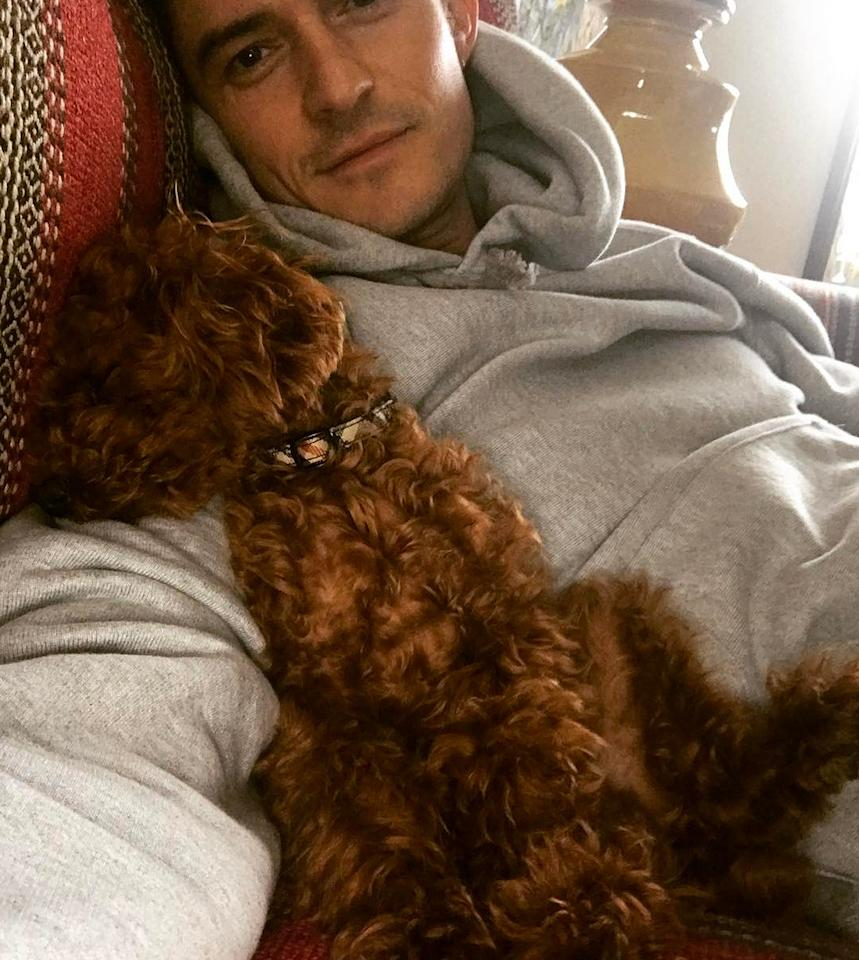 <p>The actor couldn't resist taking a selfie with his supremely comfy, cuddly buddy. </p>