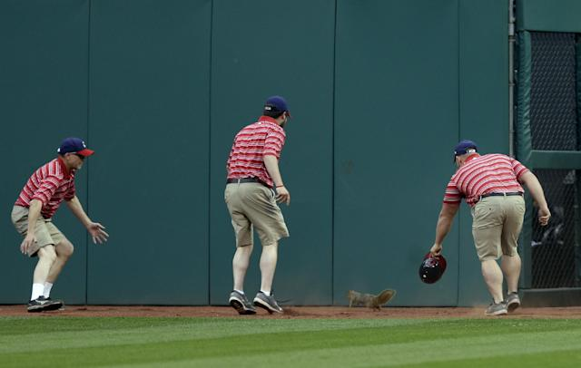 The grounds crew chases a rouge squirrel in center field in the third inning of a baseball game between the Kansas City Royals and the Cleveland Indians Monday, April 21, 2014, in Cleveland. (AP Photo/Mark Duncan)