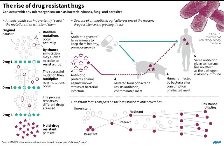 Graphic on drug resistant bugs