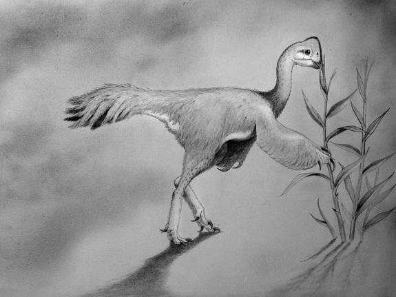 Feathered Dinos Were Diverse Like Darwin's Finches