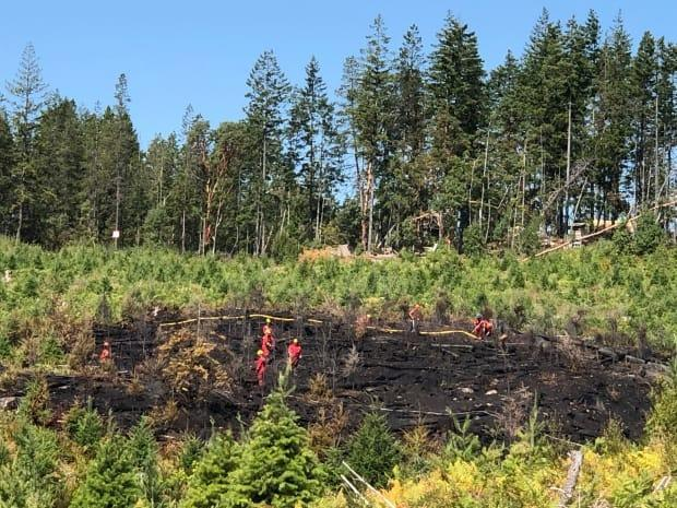 Gogo's Christmas Tree Farm, located at 2625 S. Forks Rd. just south of Nanaimo, B.C., suffered a fire that burned about 1,000 mature, pruned Christmas trees. (Submitted by Mildred Pamplona - image credit)