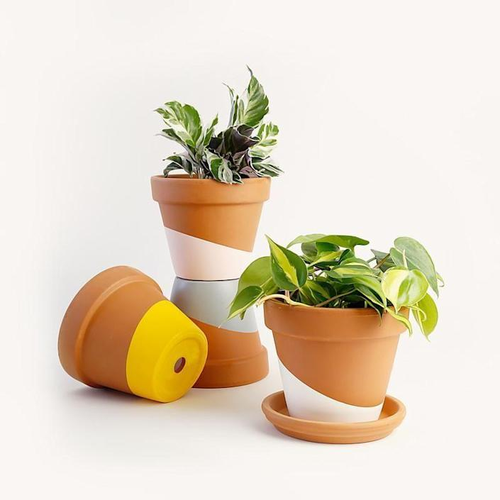 """<p><strong>Horti </strong></p><p>heyhorti.com</p><p><a href=""""https://heyhorti.com/collections/plant-subscription-box/products/rest-of-the-us"""" rel=""""nofollow noopener"""" target=""""_blank"""" data-ylk=""""slk:SHOP NOW"""" class=""""link rapid-noclick-resp"""">SHOP NOW</a></p><p><em>$25 for two naked plants; $20 for a plant in a terracotta pot; $20 for a plant in a painted terracotta pot</em></p><p>Horti's subscription service has something for everyone, even those without green thumbs. Select the New to Planting plan to get easy-care plants, the Pet-Friendly Plan to receive non-toxic plants that you can keep around your cat or dog, or Horti's Pick plan for a carefully selected mix of the two. You can decide if you want your new plant to arrive solo or tucked inside a terracotta pot, plain or hand-painted. </p>"""
