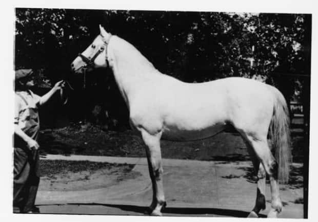 The thoroughbred stallion Saint Sylvestre, winner of Grand Champion Thoroughbred Stallion at The Royal Winter Fair in the 1920s. He was owned by Raoul Reymond, who emigrated with his wife from Switzerland in 1925, buying a fox farm in Southport. He and his wife became operators of Dalvay By-The-Sea in 1959.  (PARO - image credit)