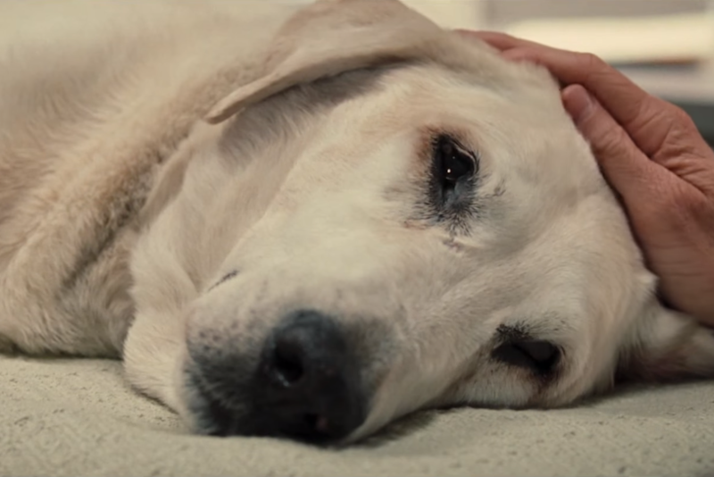 Marley and Me: 20th Century Fox