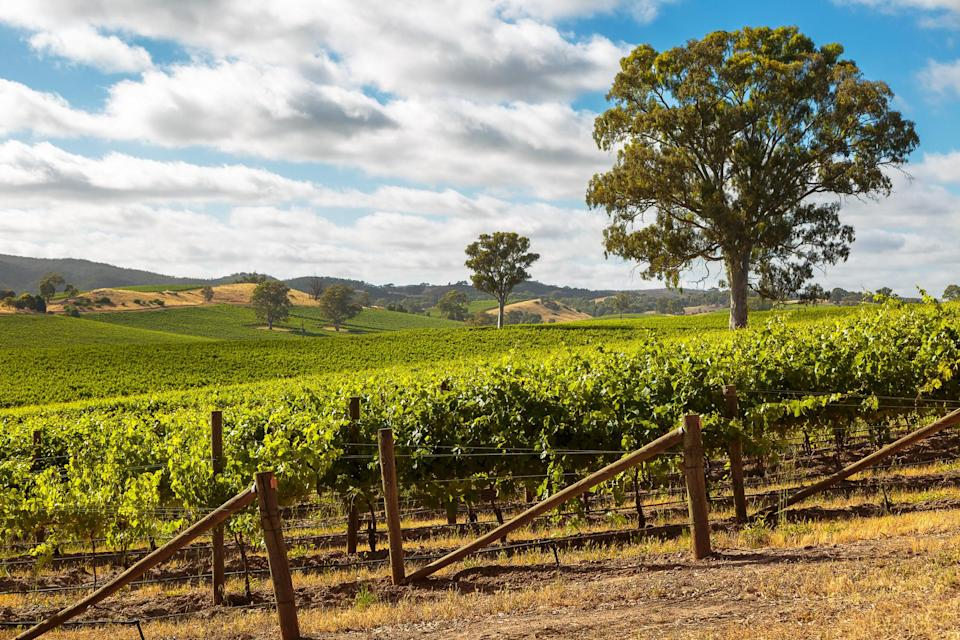 A winery in Barossa Valley, Adelaide.