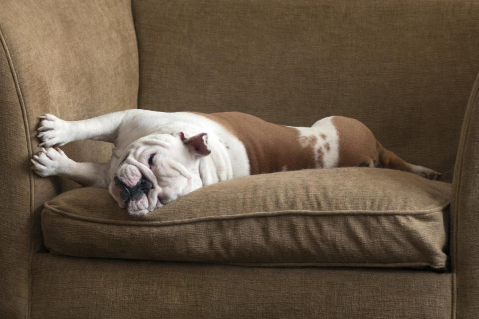 A top-rated Amazon product helps make it easier to clean pet hair. (Image via Getty Images)