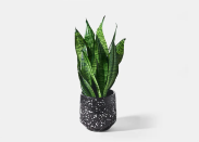 """<p>urbanstems.com</p><p><a href=""""https://go.redirectingat.com?id=74968X1596630&url=https%3A%2F%2Furbanstems.com%2Fproducts%2Fplants%2Fthe-orion%2FNF-K-00012.html&sref=https%3A%2F%2Fwww.elledecor.com%2Fshopping%2Fbest-stores%2Fg19574855%2Fbuy-plants-online%2F"""" rel=""""nofollow noopener"""" target=""""_blank"""" data-ylk=""""slk:Shop Now"""" class=""""link rapid-noclick-resp"""">Shop Now</a></p><p>Live for a curated shopping experience? If you can't stand the thought of scrolling through an excessive number of pages online to find that one perfect plant, UrbanStems is for you. It offers a small selection of unique plants that are perfect for your home or gifting.</p>"""