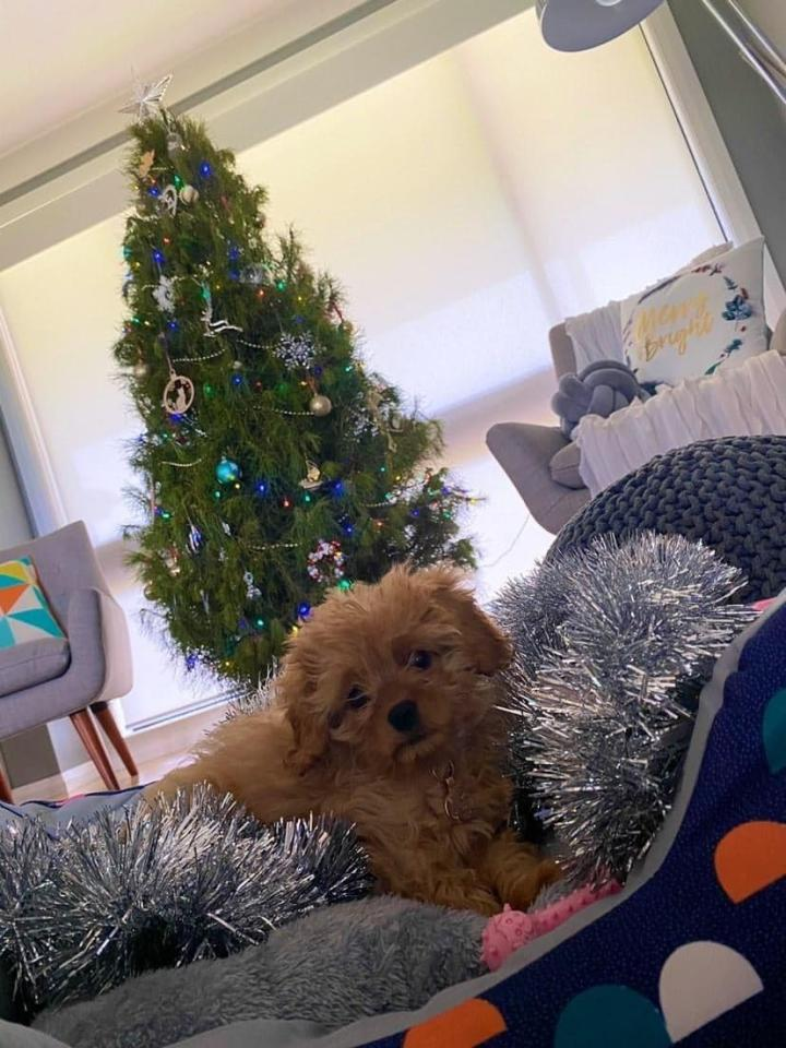 Little Posy is super excited for her first Christmas. Photo: Supplied/Jade
