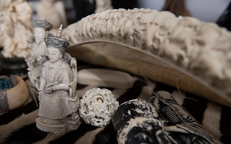 The ivory trade is blamed for driving elephants to the brink of extinction - Copyright ©Heathcliff O'Malley , All Rights Reserved, not to be published in any format without p
