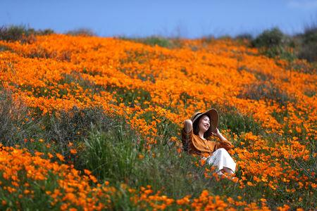 A woman sits in a super bloom of poppies in Lake Elsinore, California, U.S., February 27, 2019.  REUTERS/Lucy Nicholson