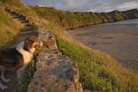 "<p>It only sounds crazy that this stretch on the Gower Peninsula is mentioned in the same breath as Hawaii and Thailand until you've been here. </p><p>The views are spectacular from every angle (if you can hold your dog back, try to take in the panorama from the cliffs above), the Atlantic swell fascinates and there's plenty to do, from crossing to the low-tide-only outcrop of Worms Head to cantering across the sands.</p><p><strong>Where to stay: </strong>The highly-rated <a href=""https://go.redirectingat.com?id=127X1599956&url=https%3A%2F%2Fwww.booking.com%2Fhotel%2Fgb%2Fbroad-park.en-gb.html%3Faid%3D2070935%26label%3Ddog-friendly-beaches&sref=https%3A%2F%2Fwww.countryliving.com%2Fuk%2Ftravel-ideas%2Fdog-friendly%2Fg35163642%2Fdog-friendly-beaches%2F"" rel=""nofollow noopener"" target=""_blank"" data-ylk=""slk:Broad Park"" class=""link rapid-noclick-resp"">Broad Park</a> is loved by couples, and those who are looking to explore the area. The accommodation is room-only but is nearby to lots of other dining options.</p><p><a class=""link rapid-noclick-resp"" href=""https://go.redirectingat.com?id=127X1599956&url=https%3A%2F%2Fwww.booking.com%2Fhotel%2Fgb%2Fbroad-park.en-gb.html%3Faid%3D2070935%26label%3Ddog-friendly-beaches&sref=https%3A%2F%2Fwww.countryliving.com%2Fuk%2Ftravel-ideas%2Fdog-friendly%2Fg35163642%2Fdog-friendly-beaches%2F"" rel=""nofollow noopener"" target=""_blank"" data-ylk=""slk:CHECK PRICES"">CHECK PRICES</a></p>"