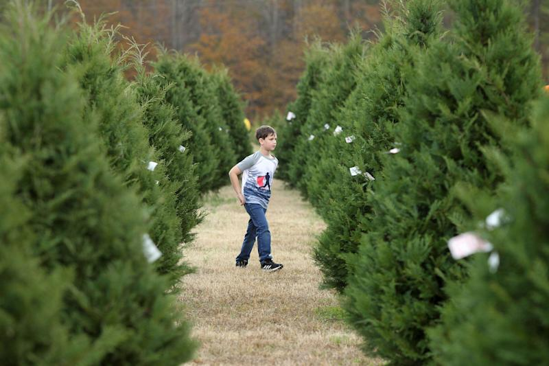 Mason Davis, 7, roams the aisles of Christmas trees as he helps his family look for the perfect tree at Worthey Tree Farm in Amory, Mississippi. (Photo: ASSOCIATED PRESS)
