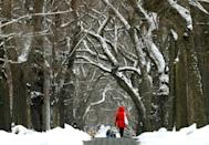 A tree-lined street near Central Park in New York's Manhattan after a snow storm