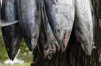 In this Wednesday, April 10, 2019, photo, fish hang for sale at a roadside stall outside Nuku'alofa, Tonga. China is pouring billions of dollars in aid and low-interest loans into the South Pacific, and even in the far-flung kingdom of Tonga there are signs that a battle for power and influence among much larger nations is heating up and could exact a toll. (AP Photo/Mark Baker)