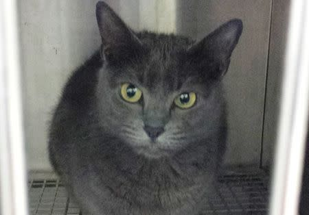 Kush the cat is seen in a cage at the local police station in DeLand, Florida in this handout picture from the DeLand Police Department