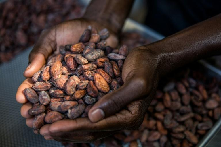 A worker sorts cocoa beans in the workshop of the Makaya chocolate company in Petionville, Haiti