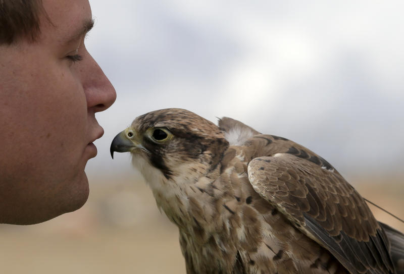 In this Oct. 28, 2013 photo, Daniel Hedin, 28, works Mia, a 5-year-old Harris hawk at the Olinda Alpha landfill in Brea, Calif. Hedin, is a subcontractor for Airstrike Bird Control, a falcon-based bird abatement company. (AP Photo/Chris Carlson)