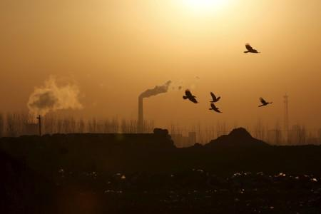 Birds fly over a closed steel factory where chimneys of another working factory are seen in background, in Tangshan