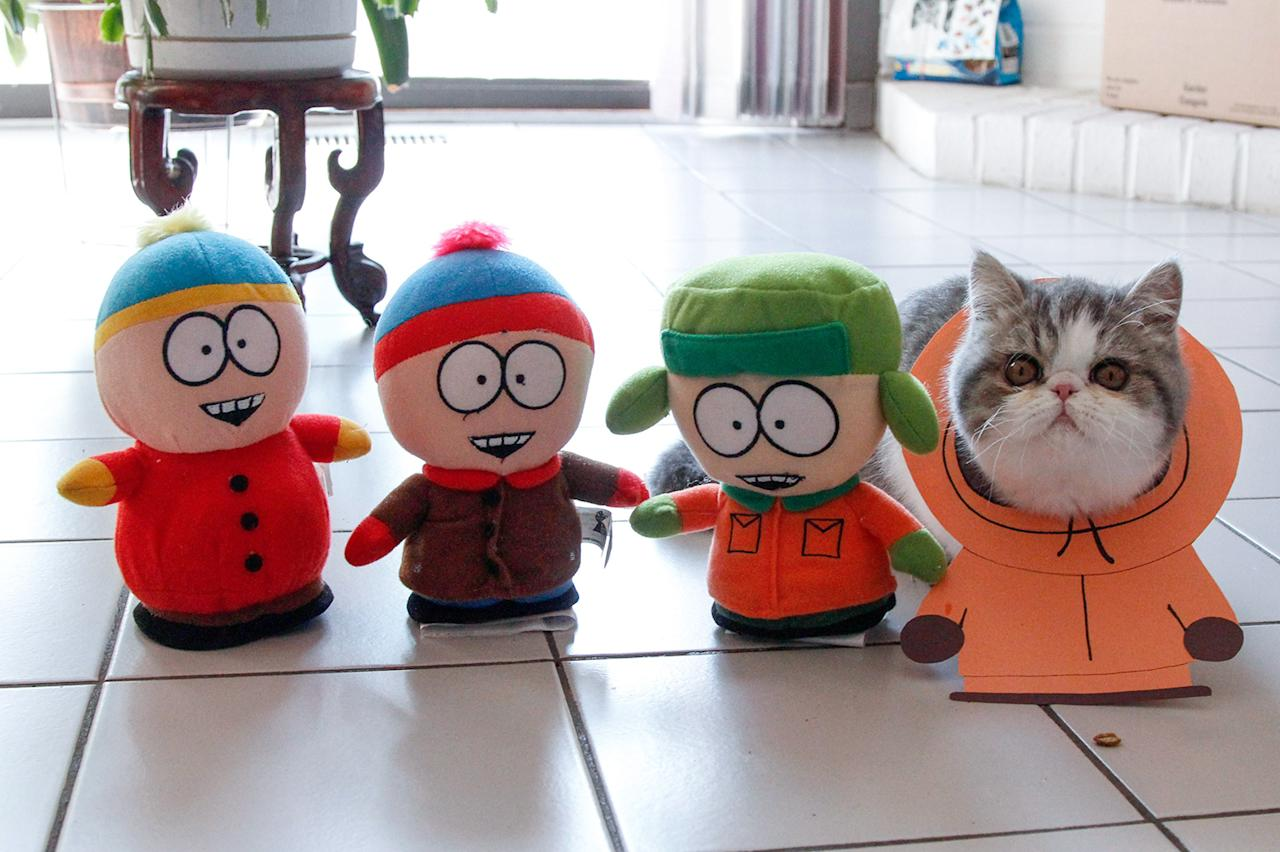 "<p>Kenny McCat (McCormick) from South Park. Shirley, from Toronto, decided to document her beloved moggies' daily cat-tivities, and later came up with the idea of dressing them up in hilarious handmade costumes."" (Photo: DailySnoopy/Caters News) </p>"
