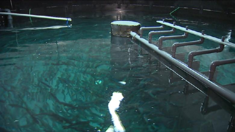 Nova Scotia land-based fish farm gets $1M federal investment