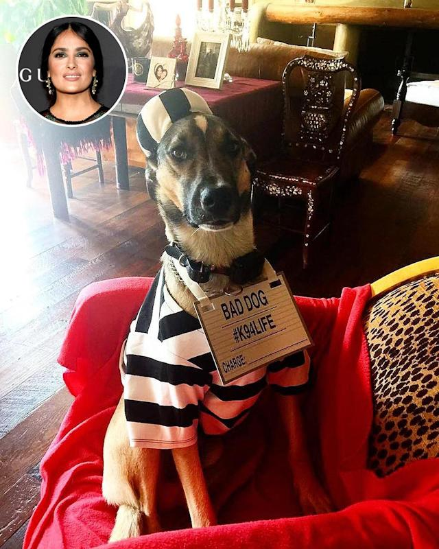 "<p>Hayek had a full house, without even going to a Halloween party. The actress outfitted her dogs as a prisoner (as pictured here) and others as <a href=""https://www.instagram.com/p/BMPK9a4A2Vo/?taken-by=salmahayek&hl=en"" rel=""nofollow noopener"" target=""_blank"" data-ylk=""slk:a dragon and a pumpkin"" class=""link rapid-noclick-resp"">a dragon and a pumpkin</a> in a post wishing everyone a happy holiday. (Photo: <a href=""https://www.instagram.com/p/BMPK9a4A2Vo/?taken-by=salmahayek&hl=en"" rel=""nofollow noopener"" target=""_blank"" data-ylk=""slk:Instagram"" class=""link rapid-noclick-resp"">Instagram</a>/Getty Images) </p>"