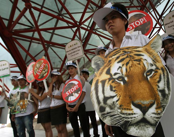 """Thai activists hold posters urging people to stop the trading of tigers during the Convention on International Trade in Endangered Species, or CITES, in Bangkok Sunday, March 3, 2013. How to slow the slaughter and curb the trade in """"blood ivory"""" will be among the most critical issues up for debate at the 177-nation Convention on International Trade in Endangered Species, or CITES, that gets under way Sunday in Bangkok. And the meeting's host, Thailand, will be under particular pressure to take action. (AP Photo/Sakchai Lalit)"""