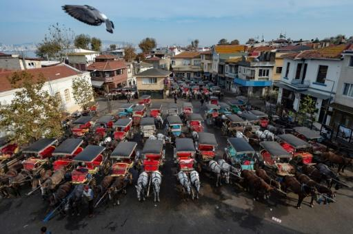 Istanbul authorities have now announced a three-month ban on the carriage rides