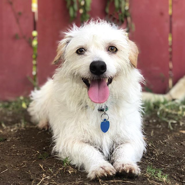 <p>This tender Lowrider Terrier mix has the most adorable face ever!</p>