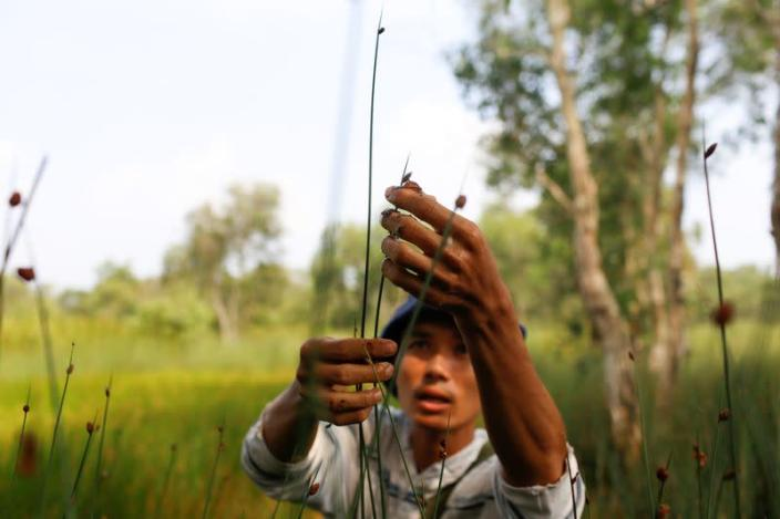 Tran Minh Tien, owner of 3T shop, collects grass to make straws at a field in Long An province