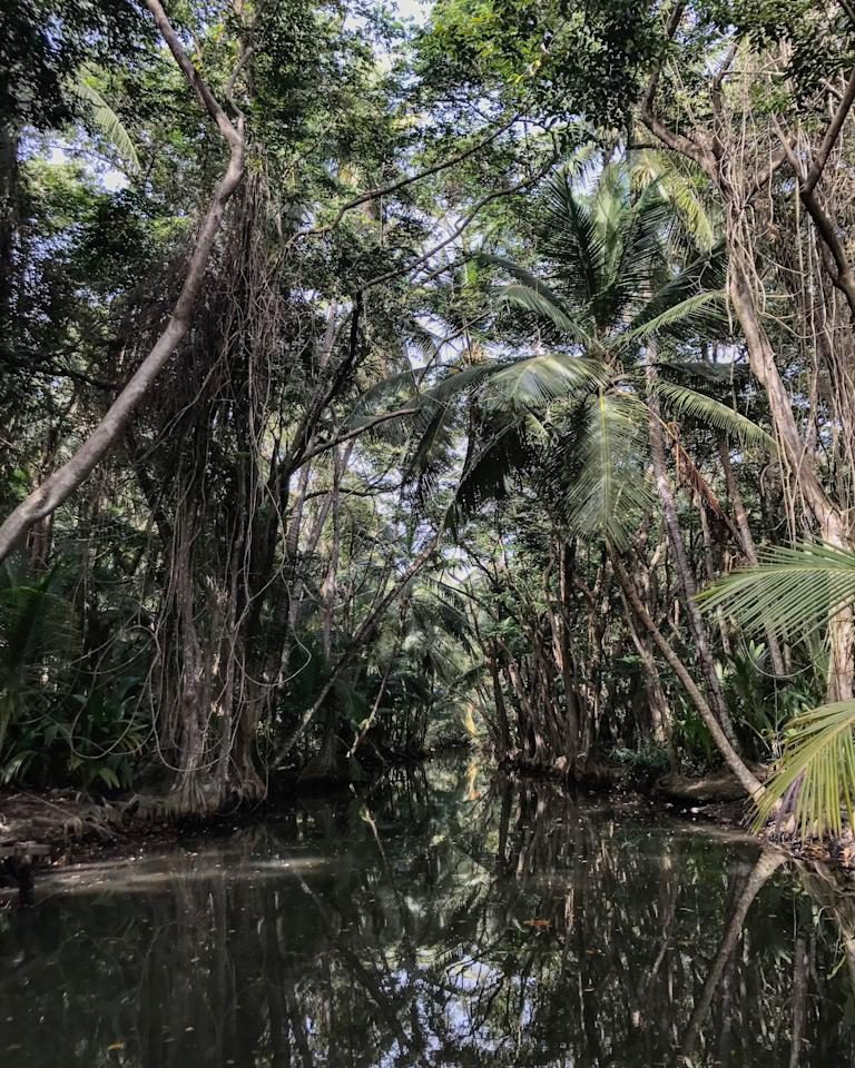 """<p><b>Paddle Through the Indian River</b></p><p>Don't worry, your guide will be the one doing the rowing, but the calm and serene Indian River is a must for fans of <em>Pirates of the Caribbean,</em> where a few scenes of <em>Dead Man's Chest</em> were filmed. The original witch's hut is no longer there; however, a replica stands in its place and tourists would be none the wiser if they weren't told it wasn't the real thing. Enjoy cruising underneath the canopy of trees, and channel your inner Jack Sparrow at a riverside bar upstream.</p><p><b>Whale and Dolphin Watching</b></p><p>While they're most prevalent in April during mating season, Dominica's resident population of sperm whales can be seen year-round. Head to the southern end of the island to catch glimpses of the largest toothed whale, as well as a myriad of dolphins as they playfully jump in and out of the water.</p><p><b>Go Bird-Watching or Forest Bathing</b></p><p>For those who have the patience or want some quiet time in the backwoods, consider heading up to Syndicate Forest with a man known as Dr. Birdy in search of the endemic Imperial Amazon parrot, the elusive blue-headed hummingbird, and more. Or, for those who need to decompress and are hoping to shut their mind off from the outside world, consider <a rel=""""nofollow"""" href=""""http://www.vogue.com/article/what-is-forest-bathing-best-beauty-products-tree-sap-soap?mbid=synd_yahootravel"""">forest bathing</a>, in which host Terri EarthDancer says the goal is to """"reimmerse ourselves in the hidden power of nature.""""</p>"""